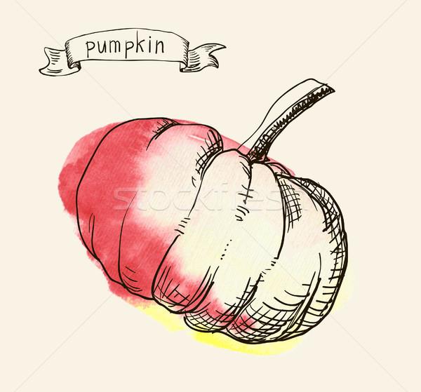 hand drawn vintage illustration of pumpkin Stock photo © Mamziolzi
