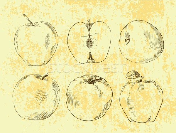 Set sehr detaillierte Hand gezeichnet Äpfel Sammlung Stock foto © Mamziolzi