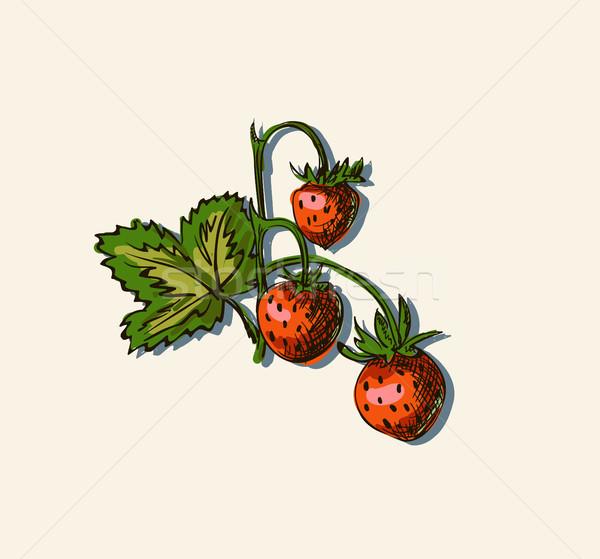 Vector illustration drawing of strawberry Stock photo © Mamziolzi