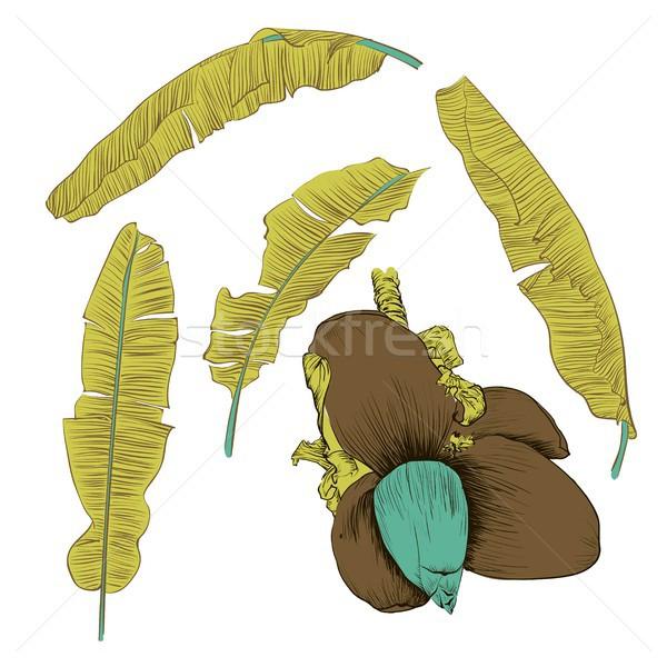 Set of stylized banana leaves. Decorative image with tropical foliage, flowers Stock photo © Mamziolzi