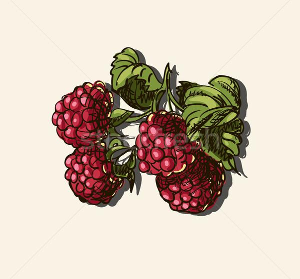 Vector illustration of raspberries Stock photo © Mamziolzi