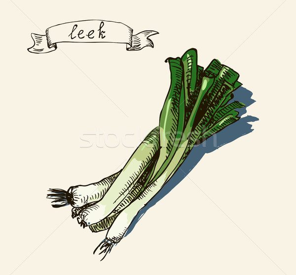 hand drawn vintage illustration of leek Stock photo © Mamziolzi
