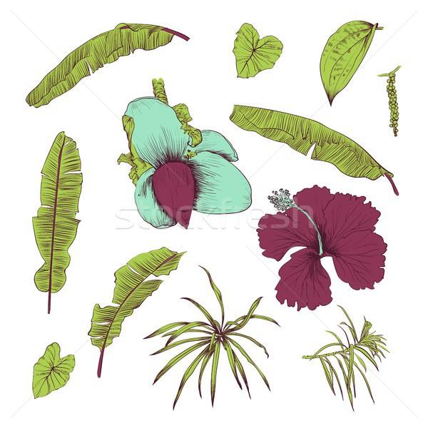 Сток-фото: рисованной · тропические · растений · цветок · листьев