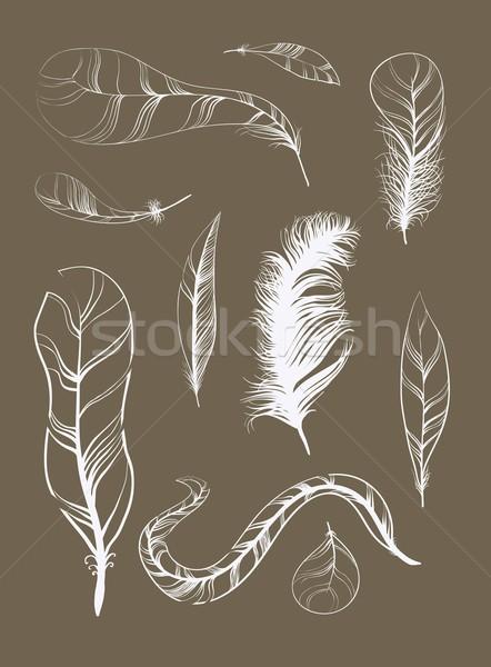 Vecteur croquis plumage décoration graphiques Photo stock © Mamziolzi