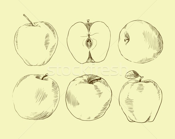 Set of highly detailed hand drawn apples. Stock photo © Mamziolzi