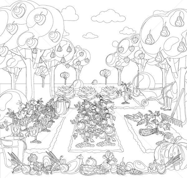 Vintage garden banner with root veggies coloring book Stock photo © Mamziolzi