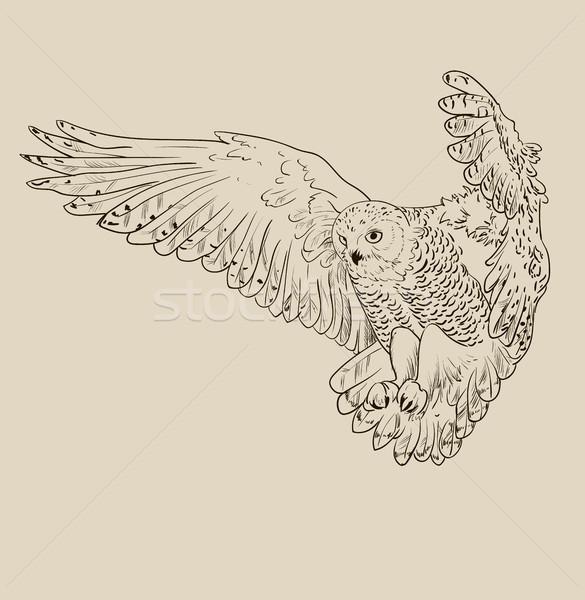 フクロウ 手描き 黒白 孤立した デザイン 背景 ストックフォト © Mamziolzi