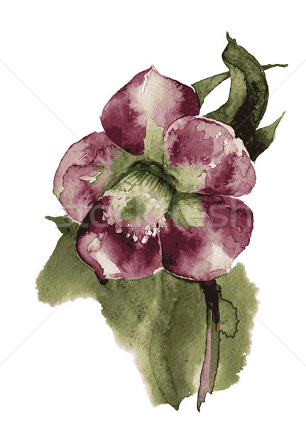 Hand Painted flowe vector Stock photo © Mamziolzi