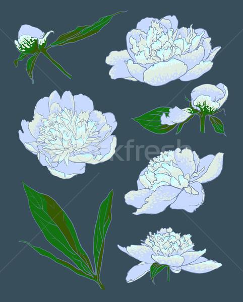 Peony flowers vector llustration Stock photo © Mamziolzi