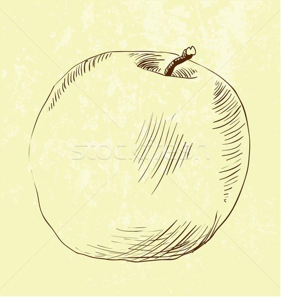 vector hand drawn apple Stock photo © Mamziolzi