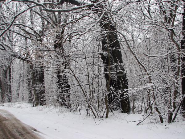 Winter with falling snow Stock photo © Mamziolzi