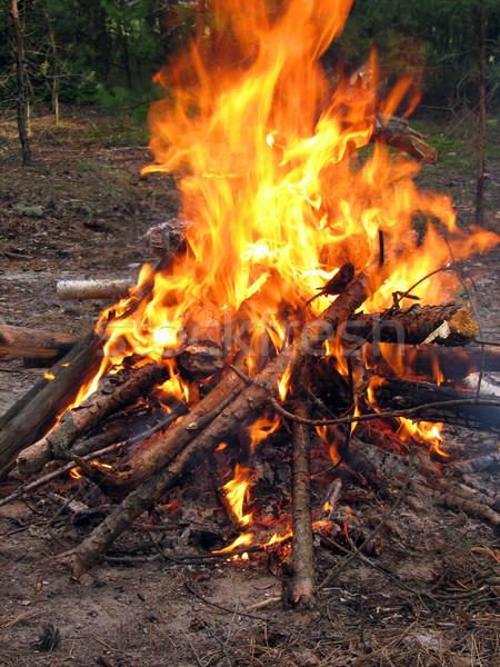 Falò foresta primavera fuoco Ucraina legno Foto d'archivio © Mamziolzi