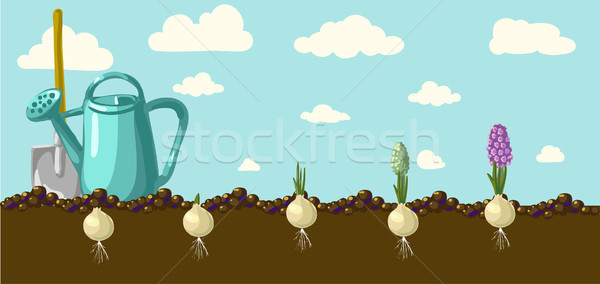Vector hyacint tuin nederlands vintage Stockfoto © Mamziolzi