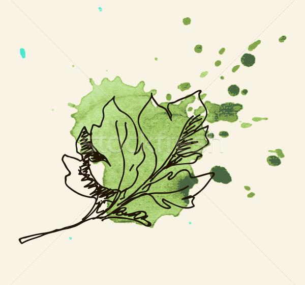 Peterselie kruid blad salade plant witte Stockfoto © Mamziolzi