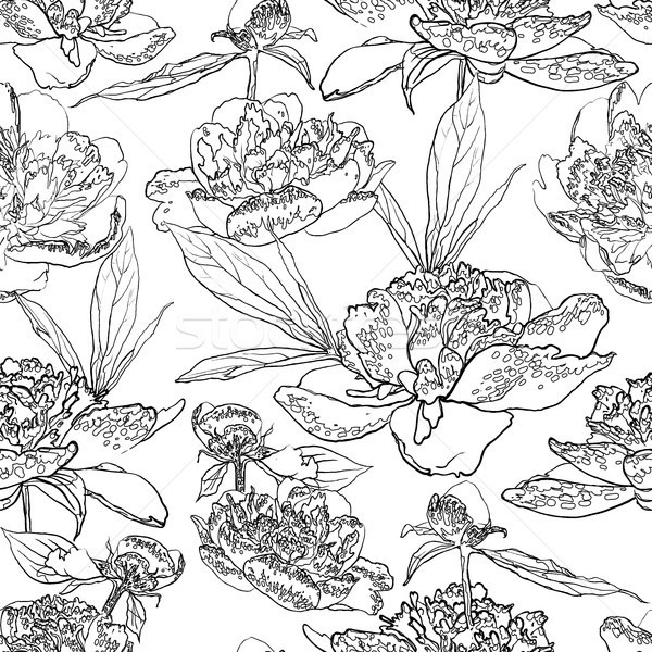 Seamless floral background with peonies coloring book Stock photo © Mamziolzi