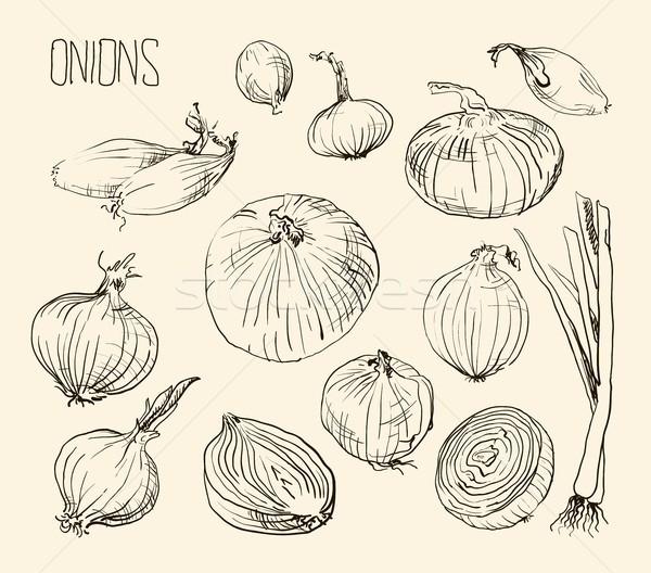 Onion set, vector illustration Stock photo © Mamziolzi