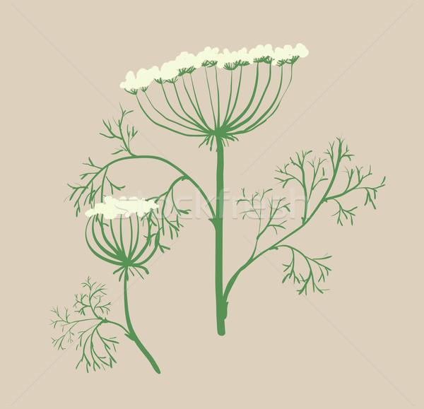 Set of floral graphic design elements dill, Ukraine Stock photo © Mamziolzi