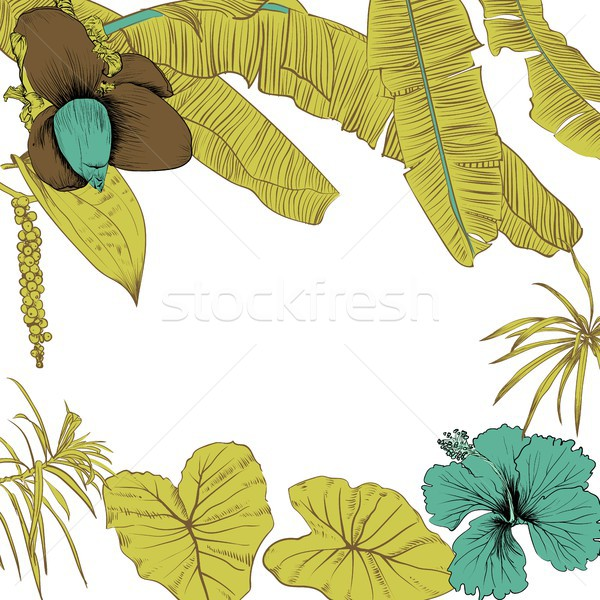 Stock photo: Hand drawn of tropical plants banana leaves and flower