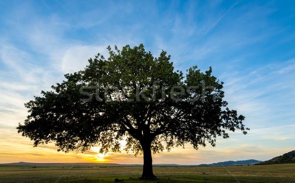 Boom veld zonsondergang hemel landschap schoonheid Stockfoto © manaemedia