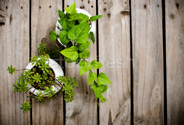 Természetes zöld növények öreg klasszikus fa deszka Stock fotó © manera