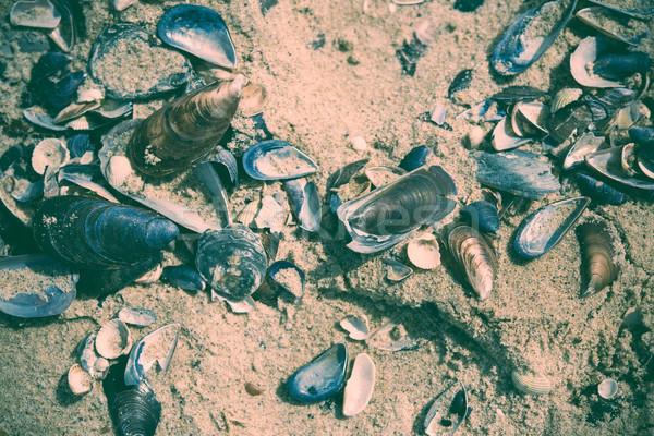 Many empty seashells Stock photo © manera