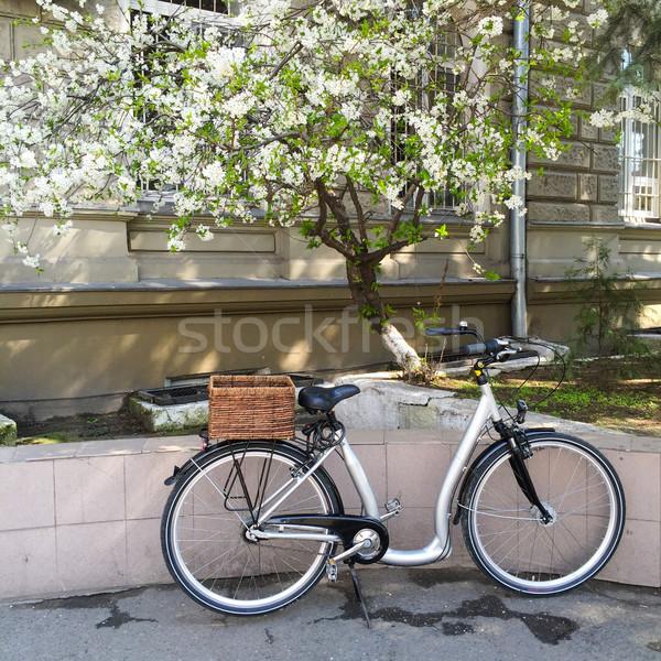 Stad fiets bloei kers boom straat Stockfoto © manera