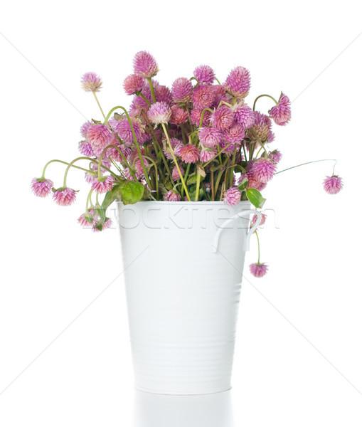 Ramo rosa flores silvestres funny confuso blanco Foto stock © manera