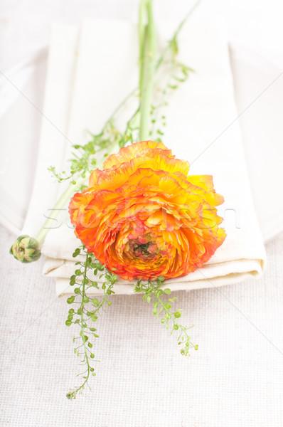 Orange ranunkulus flower Stock photo © manera