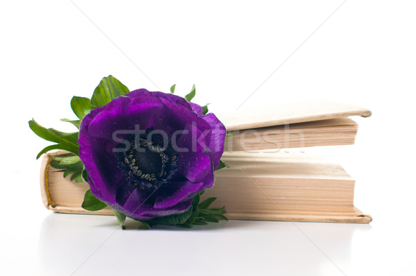anemone flower in an old book Stock photo © manera