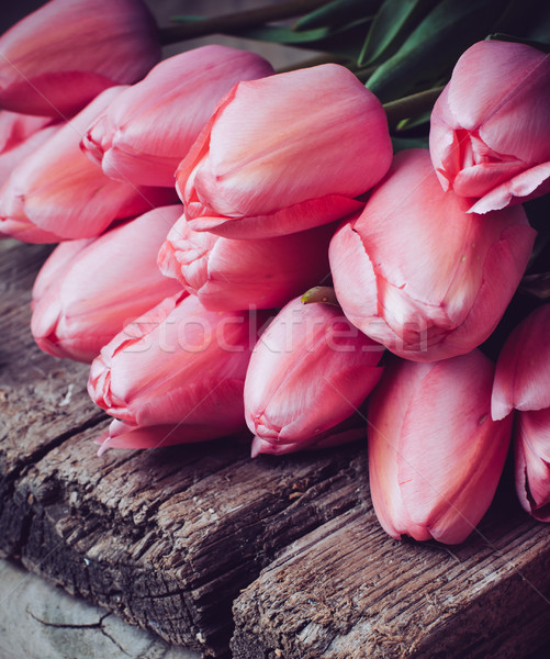 fresh spring pink tulips Stock photo © manera