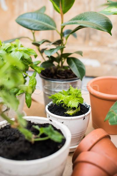 バルコニー 庭園 自然 植物 緑 都市 ストックフォト © manera