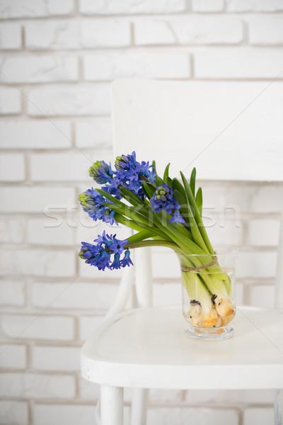 Сток-фото: синий · гиацинт · ваза · весенние · цветы · белый · Vintage