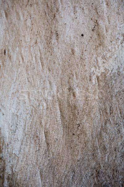 Stock fotó: Fa · ugatás · repedések · textúra · természetes · absztrakt