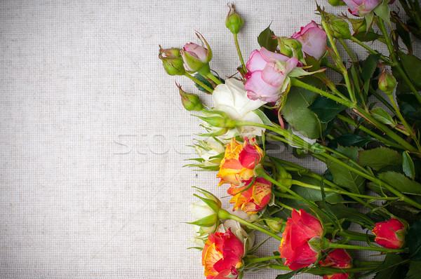 Tarka rózsák vászon szövet virágcsokor durva Stock fotó © manera