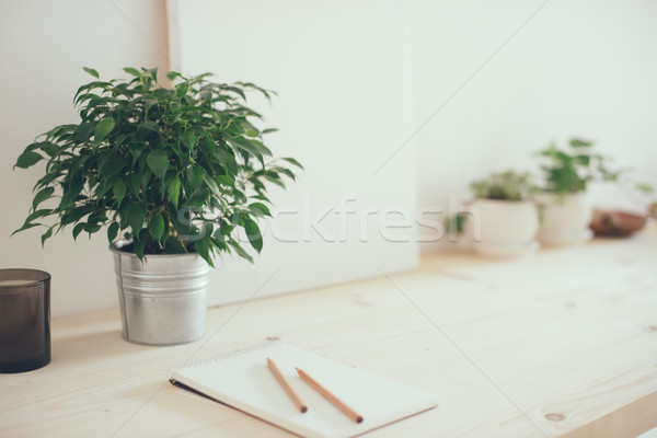 Hipster artist's work space, plants and canvas Stock photo © manera