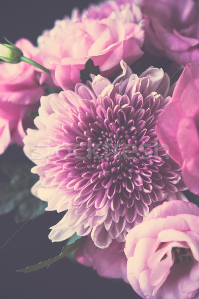 Bukiet różowy kwiaty chryzantema elegancki Zdjęcia stock © manera