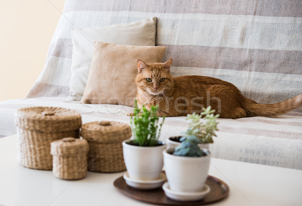 lazy ginger cat laying on a sofa Stock photo © manera