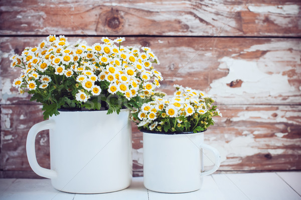 enamel mugs with chamomile flowers Stock photo © manera