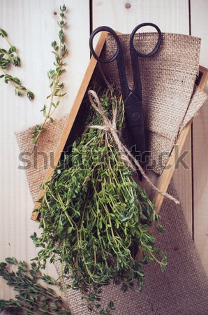 succulents in a wooden box Stock photo © manera