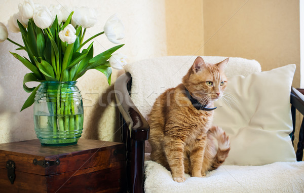 Сток-фото: домой · интерьер · кошки · сидят · кресло · стены