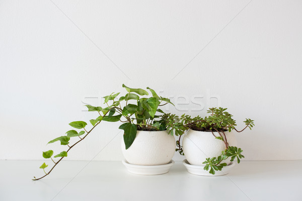 Green home plants in ceramic pots on white Stock photo © manera