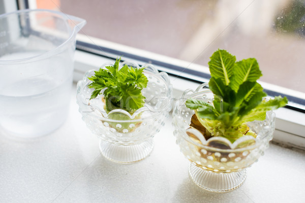 Growing celery and lettuce Stock photo © manera