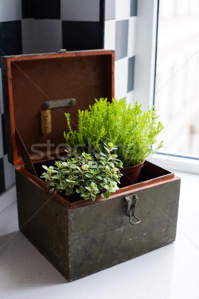 Home tuinieren planten vensterbank moderne keuken interieur Stockfoto © manera