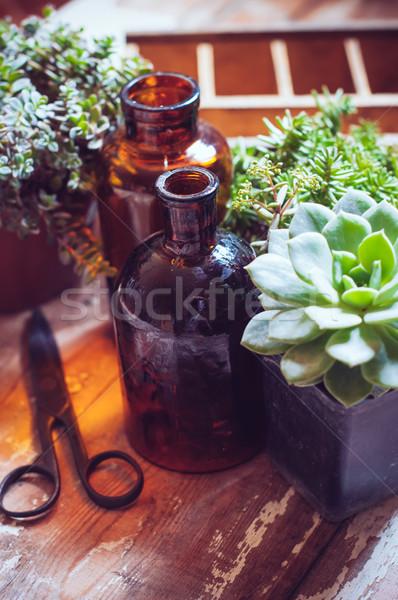 ストックフォト: 家 · 植物 · ボトル · 緑 · 古い · 木製