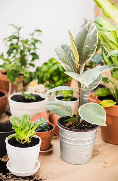 Balkon tuin natuurlijke planten groene stedelijke Stockfoto © manera
