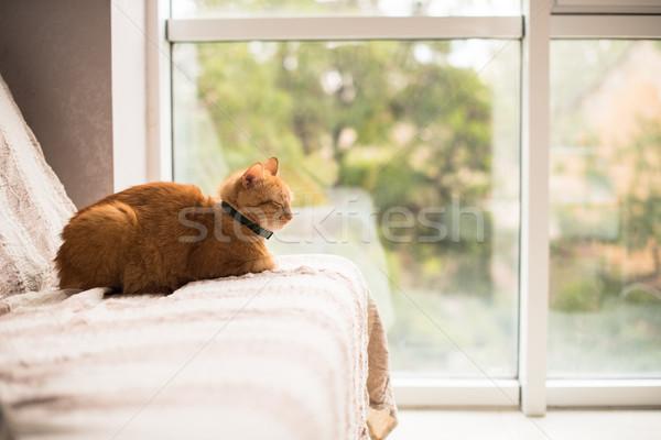 Zenzero cat divano finestra home Foto d'archivio © manera