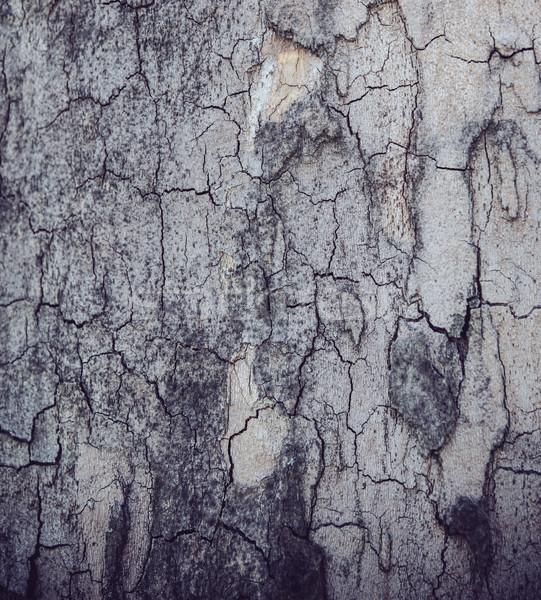 Doku ağaç havlama çatlaklar doğal soyut Stok fotoğraf © manera
