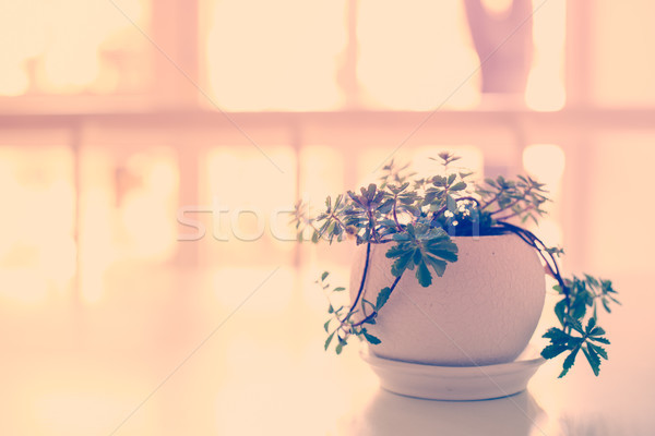 Green home plant in ceramic pot on the table in a backlight  Stock photo © manera