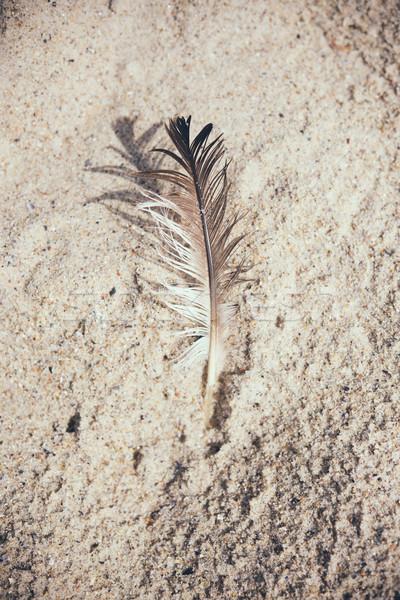 Light bird feather  Stock photo © manera