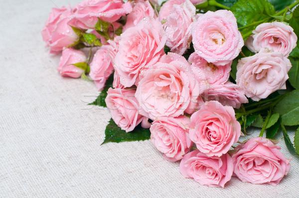 Stock fotó: Nedves · rózsaszín · rózsák · szürke · vászon · szövet